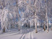 Bosque hermoso del invierno - una foto 1 Imágenes de archivo libres de regalías