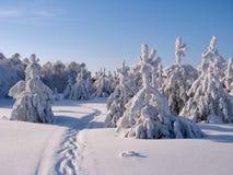 Bosque hermoso del invierno - una foto 6 Fotos de archivo