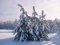 Bosque hermoso del invierno - una foto 8 Foto de archivo libre de regalías