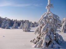 Bosque hermoso del invierno - una foto 7 Imagen de archivo