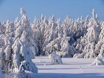Bosque hermoso del invierno - una foto 5 Fotografía de archivo libre de regalías