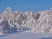 Bosque hermoso del invierno - una foto 9 Fotos de archivo