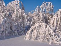 Bosque hermoso del invierno - una foto 10 Imagen de archivo libre de regalías
