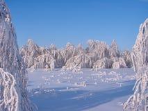Bosque hermoso del invierno - una foto 11 Imagen de archivo libre de regalías