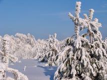 Bosque hermoso del invierno - una foto 3 Imagenes de archivo