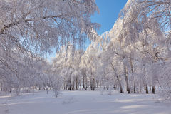 Bosque hermoso del invierno - una foto 13 Foto de archivo