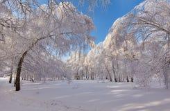 Bosque hermoso del invierno - una foto 14 Foto de archivo libre de regalías