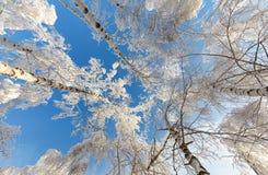 Bosque hermoso del invierno - una foto 12 Imagen de archivo libre de regalías