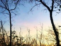 Bosque hermoso del mangle en el cielo azul imagen de archivo libre de regalías