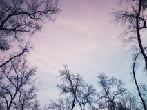 Bosque hermoso del mangle en el cielo púrpura fotografía de archivo