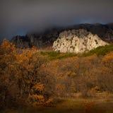 Bosque hermoso del otoño Foto de archivo libre de regalías