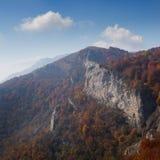 Bosque hermoso del otoño Fotografía de archivo