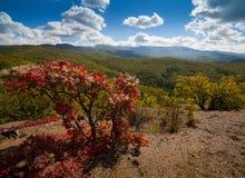 Bosque hermoso del otoño Fotos de archivo libres de regalías