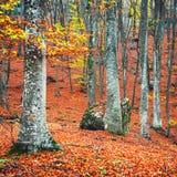 Bosque hermoso del otoño Fotos de archivo