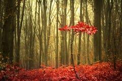 Bosque hermoso durante otoño Imágenes de archivo libres de regalías