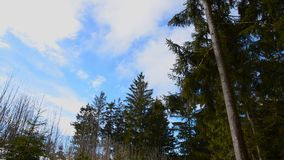 Bosque hermoso en invierno en el bei Linz de Kirchschlag en Austria septentrional almacen de video