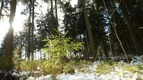 Bosque hermoso en invierno en el bei Linz de Kirchschlag en Austria septentrional almacen de metraje de vídeo
