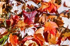 Bosque hermoso en otoño Imagenes de archivo