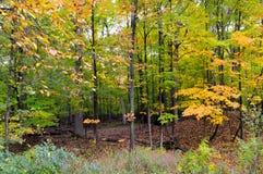 Bosque hermoso en otoño Foto de archivo