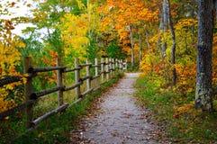Bosque hermoso en otoño Imágenes de archivo libres de regalías