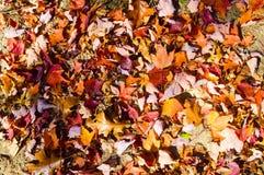 Bosque hermoso en otoño Imagen de archivo libre de regalías