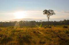 Bosque hermoso en otoño Imagen de archivo