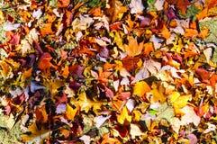 Bosque hermoso en otoño Foto de archivo libre de regalías