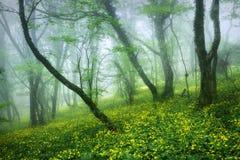 Bosque hermoso misterioso en niebla con las hojas y el amarillo del verde Imagenes de archivo
