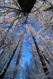 Bosque hivernal fotografía de archivo