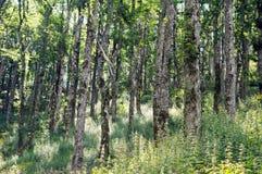 Bosque hojoso del barranco fotos de archivo