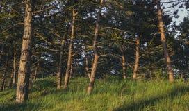 Bosque holandés en la puesta del sol Fotografía de archivo libre de regalías