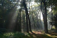 Bosque holandés místico fotografía de archivo libre de regalías