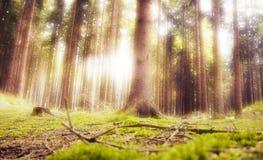 Bosque ideal Foto de archivo libre de regalías
