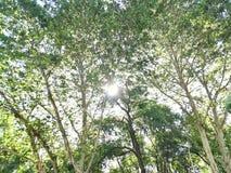 Bosque iluminado fotos de archivo libres de regalías