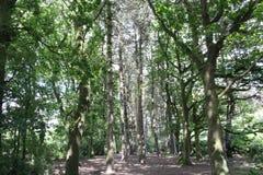 Bosque iluminado por el sol Foto de archivo libre de regalías