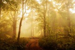 Bosque iluminado por el sol por la mañana imagen de archivo libre de regalías
