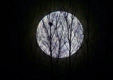 Bosque iluminado por la luna Imagenes de archivo