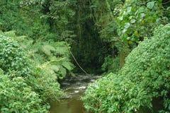 Bosque impenetrable de Bwindi en Uganda imagen de archivo