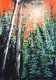 Bosque impenetrable del pino Imagen de archivo libre de regalías