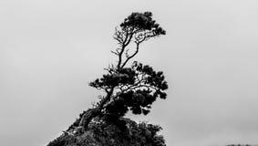 bosque inclinable Imagenes de archivo