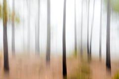 bosque inclinable Imágenes de archivo libres de regalías