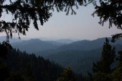 Bosque interminable de la secoya en California fotos de archivo