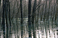 Bosque inundado Foto de archivo libre de regalías