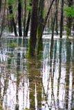 Bosque inundado Imágenes de archivo libres de regalías