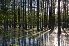 Bosque inundado Imagen de archivo libre de regalías