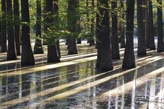 Bosque inundado Fotografía de archivo libre de regalías