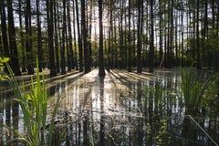 Bosque inundado Fotos de archivo
