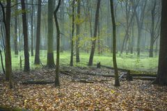 Bosque inundado en otoño imágenes de archivo libres de regalías