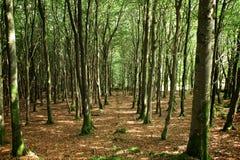 Bosque irlandés Imágenes de archivo libres de regalías