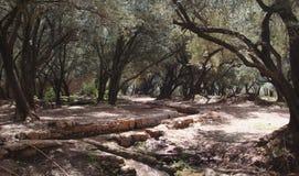 Bosque irrigado Fotos de archivo
